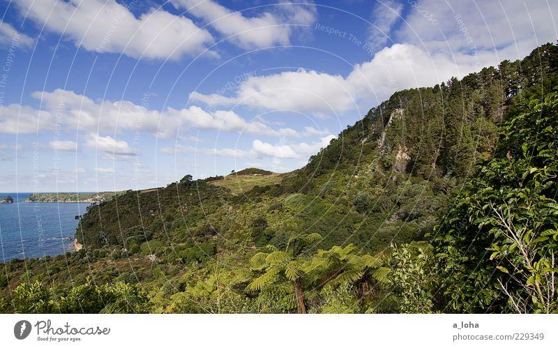 te whanganui-a-hei Nature Landscape Sky Clouds Plant Tree Bushes Wild plant Virgin forest Coast Ocean Blue Green Wanderlust Vacation & Travel Coromandel