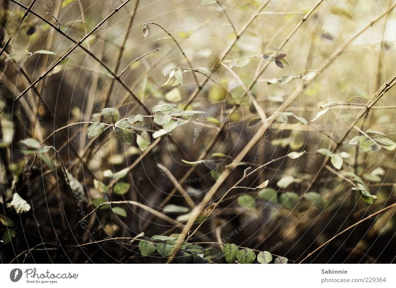 Nature Green Plant Leaf Yellow Garden Brown Bushes Stalk Blade of grass Copy Space Hedge Foliage plant Rebellious Twigs and branches Overgrown