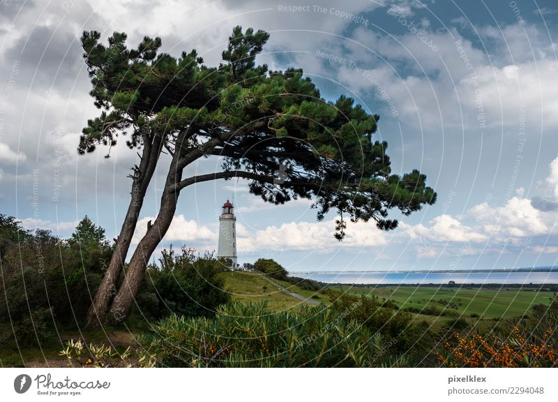 Lighthouse on the island of Hiddensee Vacation & Travel Tourism Trip Environment Nature Landscape Water Sky Clouds Climate Weather Wind Tree Meadow Hill Coast