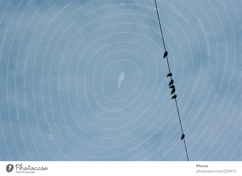 On the line Harmonious Freedom Cable Transmission lines Environment Air Sky Clouds Animal Bird Group of animals Relaxation Wait Thin Simple Together Tall Above