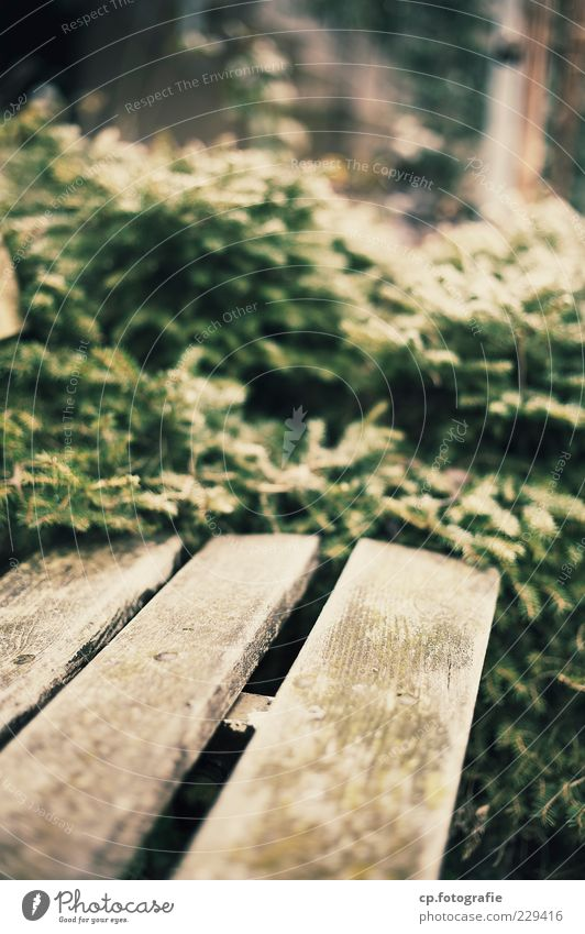 End of the road Plant Sunlight Bushes Brown Green Park bench Bench Day Shallow depth of field Wooden bench Empty Deserted Blur