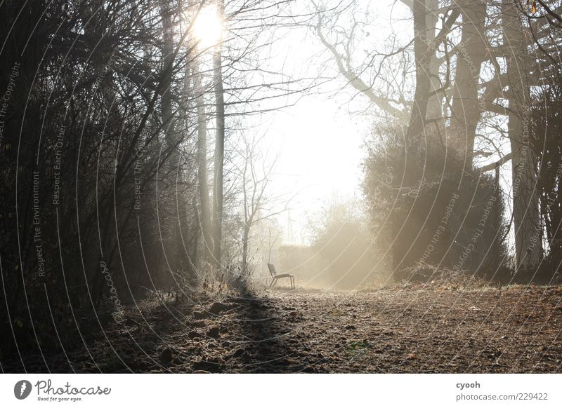 Saturday morning Nature Sun Winter Forest Relaxation Bench Calm Morning Individual Footpath Light Shadow Sunbeam Back-light Exterior shot Deserted Morning fog