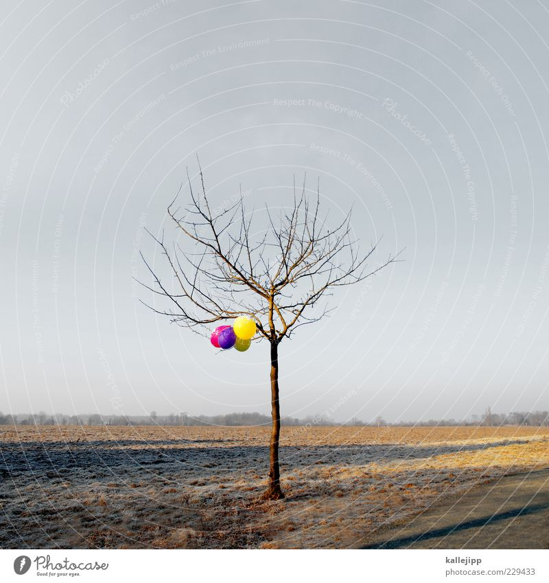 Nature Beautiful Tree Winter Environment Landscape Horizon Field Exceptional Balloon Symbols and metaphors Hang Road marking Leafless Coincidence Get caught on