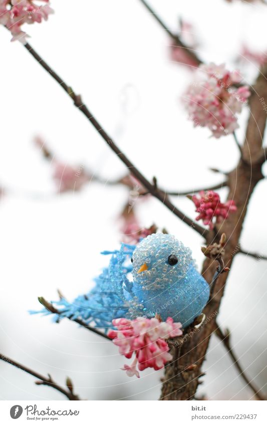 Hansi in luck tree bushes bleed birds Decoration Kitsch Odds and ends Souvenir Plastic Blue Pink Budgerigar Canary bird Cherry blossom Twigs and branches