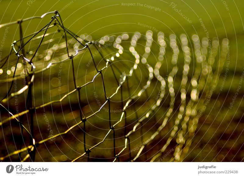 Nature Green Glittering Broken Protection Fence Border Trashy Bend Wire netting fence