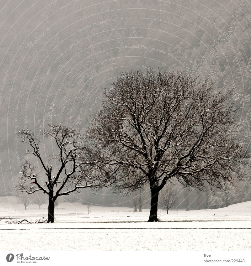 rise or fall Nature Landscape Winter Fog Plant Tree Meadow Field Forest Hill Old Dark Cold Large Strong Colour photo Exterior shot Day Light Deserted Leafless