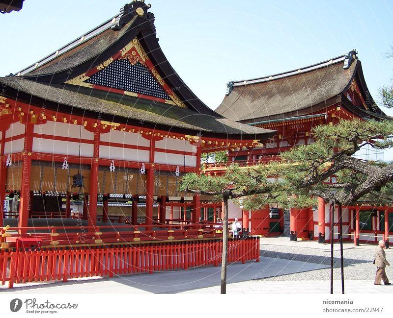 temple Japan Temple Zen Bonsar Tree Tokyo