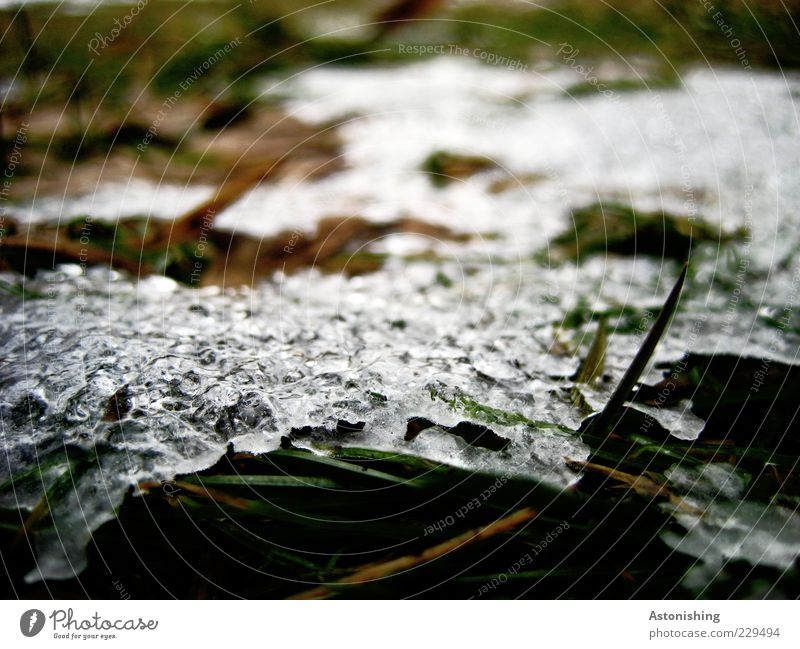last remnant Environment Nature Plant Spring Winter Ice Frost Snow Grass Meadow Cold Green Black White Remainder Frozen Blade of grass Blur Dew Ice sheet Melt
