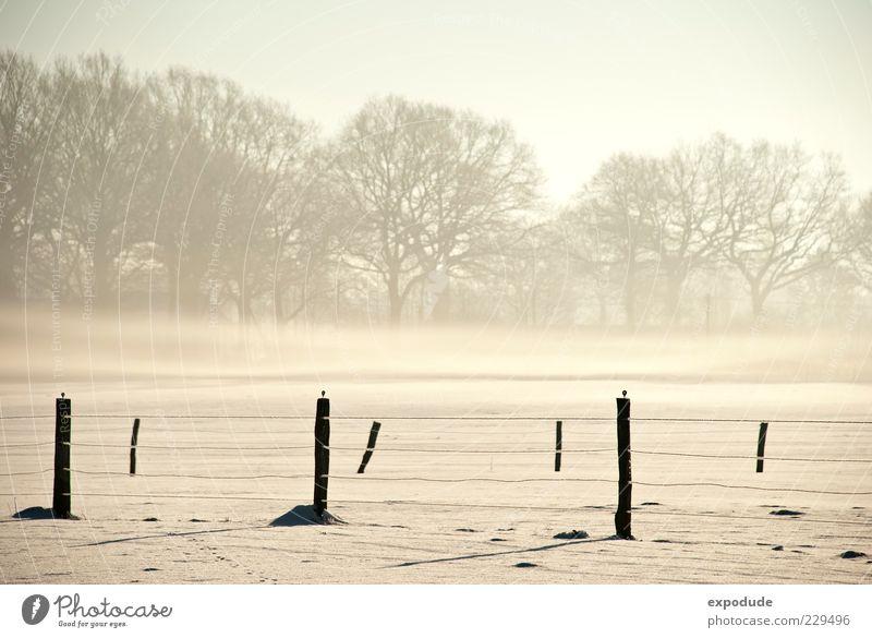 Nature Tree Snow Landscape Moody Ice Field Fog Frost Morning fog Fence post Shroud of fog Covering of fog