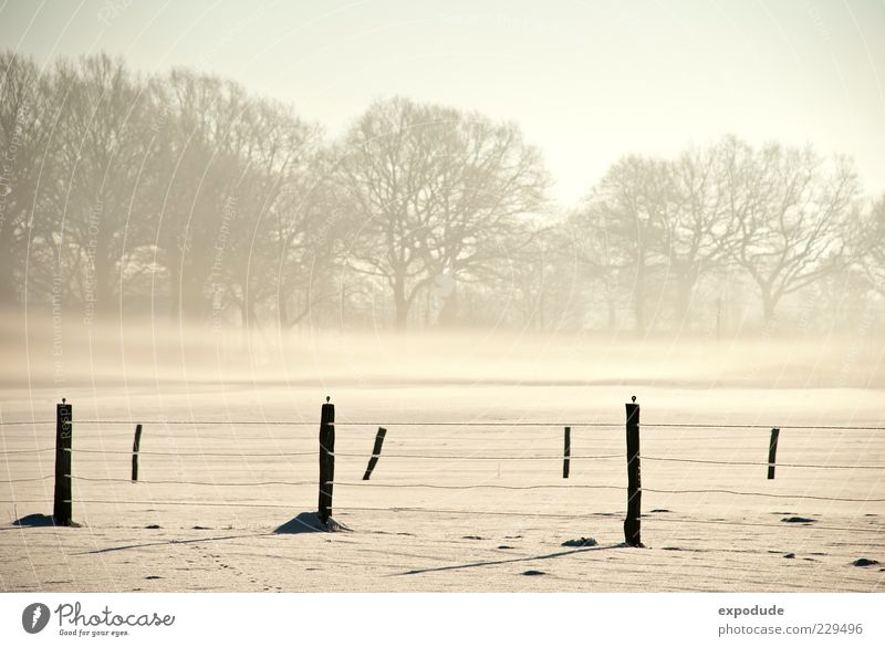 Nature Tree Snow Landscape Moody Ice Field Fog Frost Morning fog Fence post Shroud of fog Covering of fog