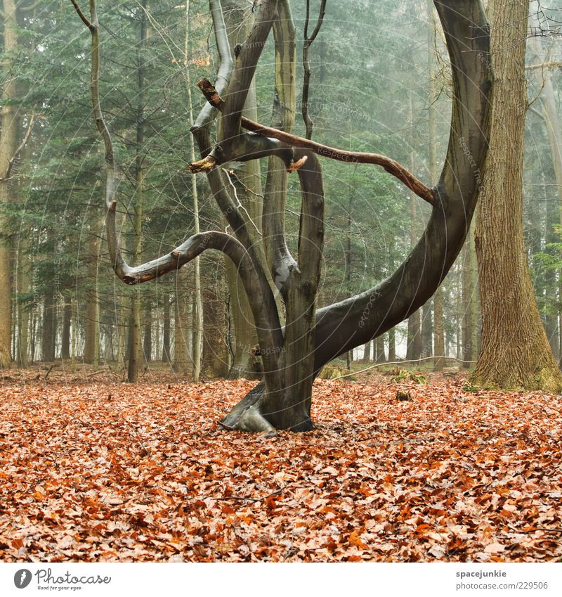 TREE Environment Nature Plant Tree Forest Exceptional Leaf grow together Go up unwieldy Wood Landscape Empty Fog Colour photo Exterior shot Deserted Growth