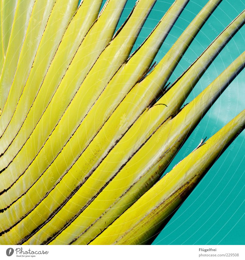 38 degrees in the shade, 80 % humidity Plant Growth Palm tree Green diversified Leaf Sky Turquoise Pattern Colour Guide Deserted Exceptional Close-up Detail