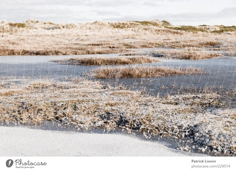 long long long winter Environment Nature Landscape Plant Elements Air Winter Climate Weather Ice Frost Snow Grass Bushes Hill Bright Cold Beautiful Puddle