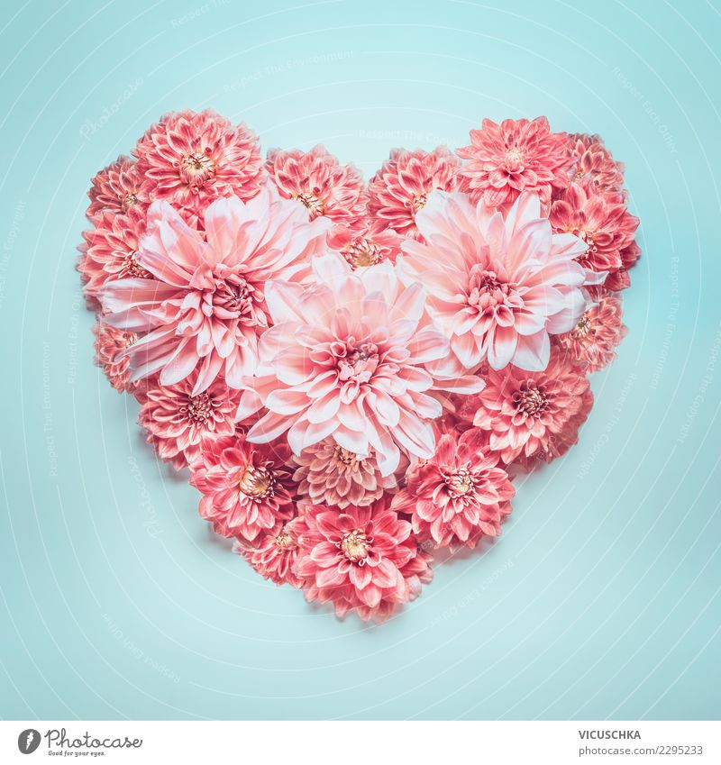 Plant Blue Summer Flower Blossom Love Style Feasts & Celebrations Pink Design Decoration Birthday Heart Sign Wedding Symbols and metaphors