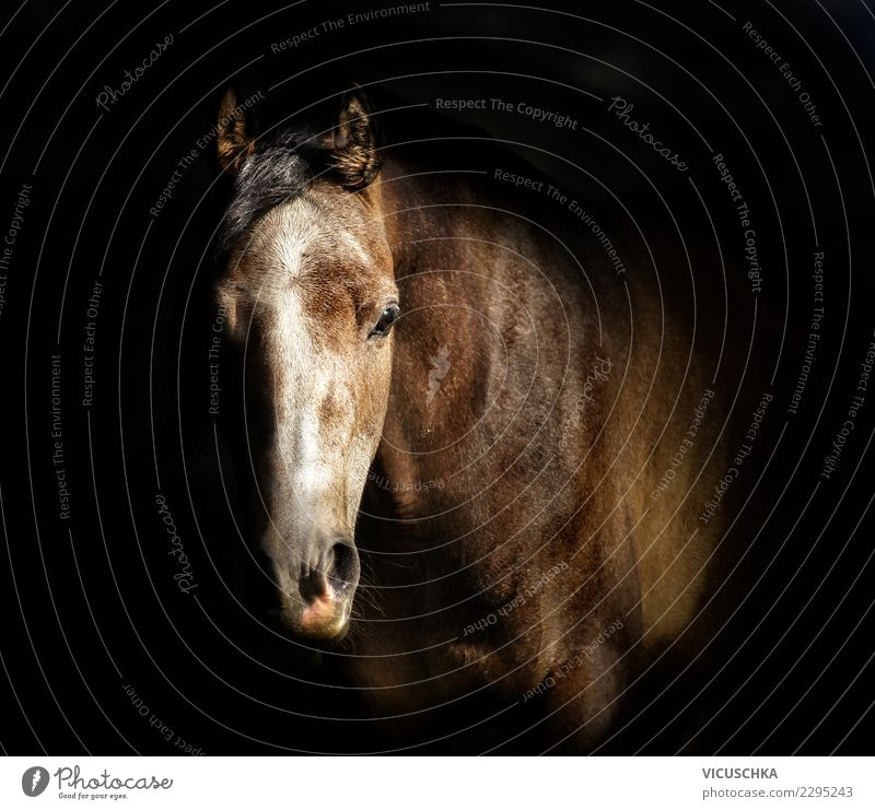 Horse head portrait on dark background Style Design Animal 1 Horse's head thoroughbred Arabian Stable Colour photo Interior shot Copy Space middle