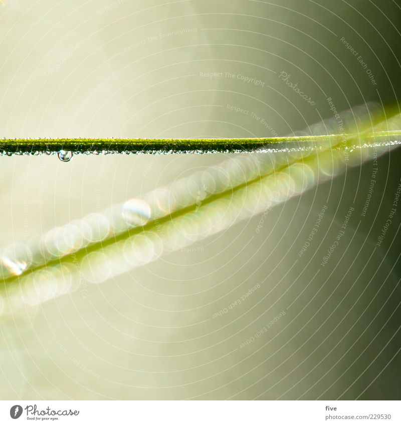 line Environment Nature Plant Foliage plant Bright Wet Green Abstract Drop Blade of grass Colour photo Close-up Detail Macro (Extreme close-up) Day Light Blur