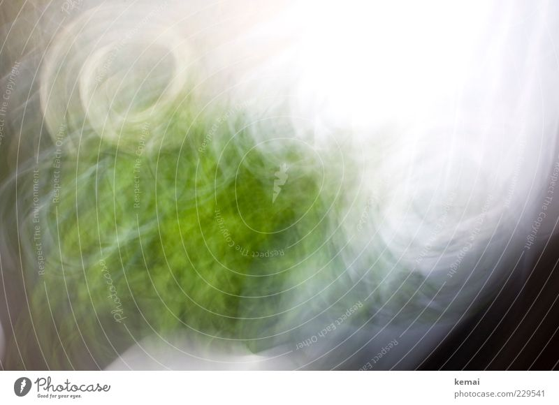 White Green Plant Bright Wild Growth Muddled Curtain Swirl Window board Long exposure Blur Motion blur Pot plant