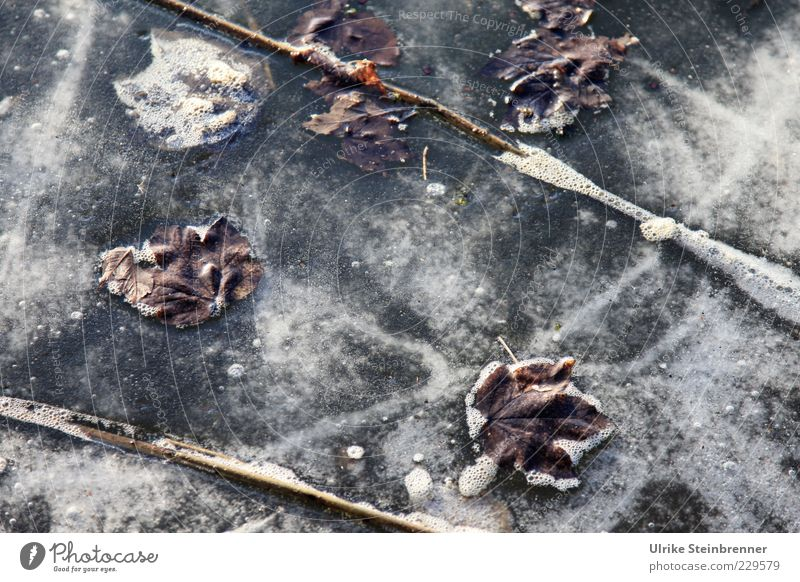 Nature Art 2 Plant Water Winter Ice Frost Leaf Lakeside Pond Freeze Wait Cold Beautiful Stagnating Frozen surface Oxygen Part of the plant Foam Colour photo