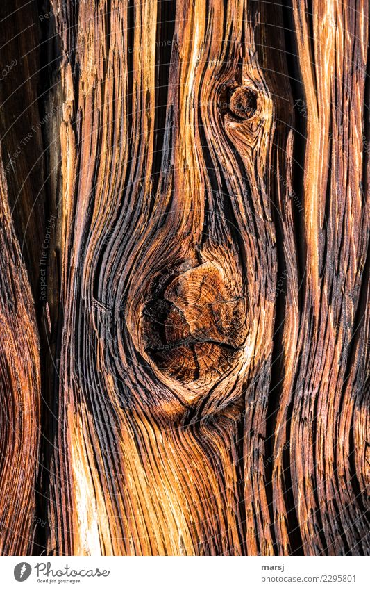Texture | eventful past Roof beams Knothole Wood grain Line Old Authentic Brown Gold Warm colour Past Patina Washed out Weathered Unwavering Colour photo