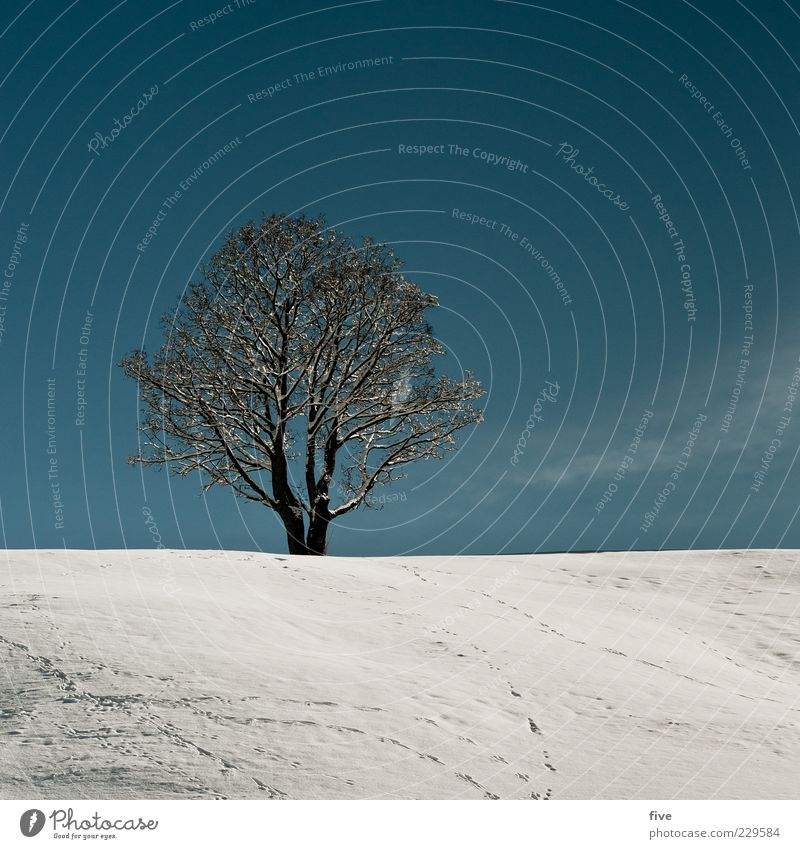 loneliness / subsequent contribution Environment Nature Sky Cloudless sky Winter Beautiful weather Snow Plant Tree Hill Old Cold Blue White Moody Power