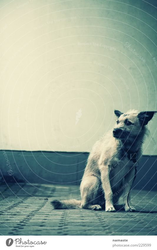 Animal Loneliness Dark Emotions Dog Sadness Moody Fear Sit Wait Facade Dangerous Broken Safety Gloomy Grief
