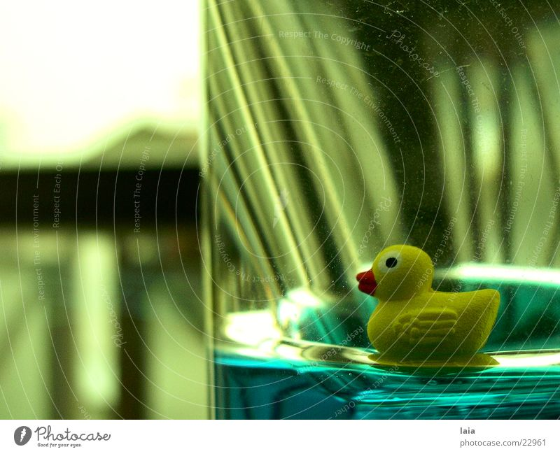 duck Window Yellow Duck Water Glass Blue