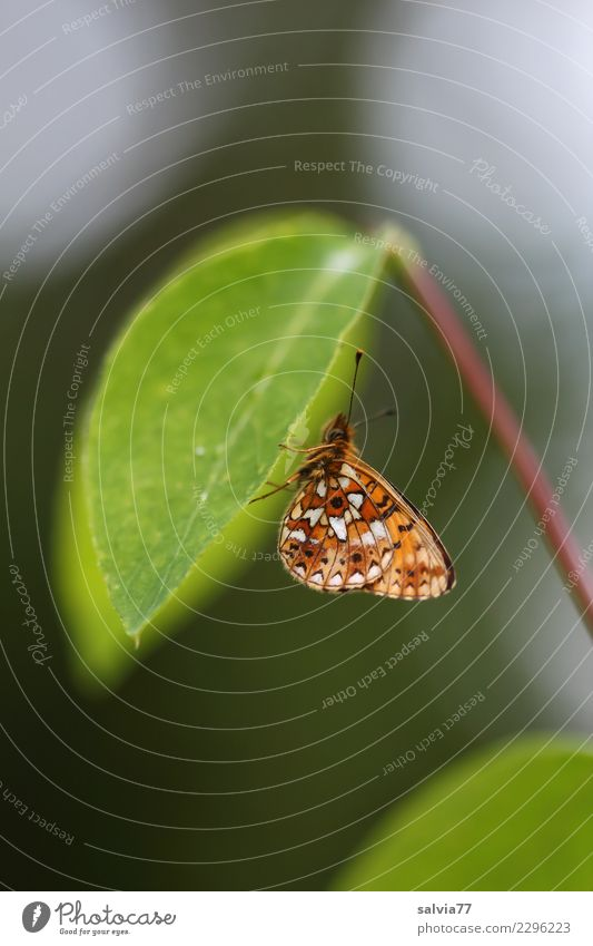 Flight operations discontinued Environment Nature Plant Animal Leaf Butterfly Wing Insect 1 Green Break Calm Protection Restful Siesta Feeler Under Colour photo