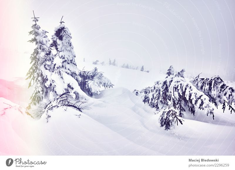 Winter landscape in a snowy day Nature Landscape Tree Clouds Mountain Cold Snow Dream Fog Weather Vantage point Hill Mysterious Seasons Serene