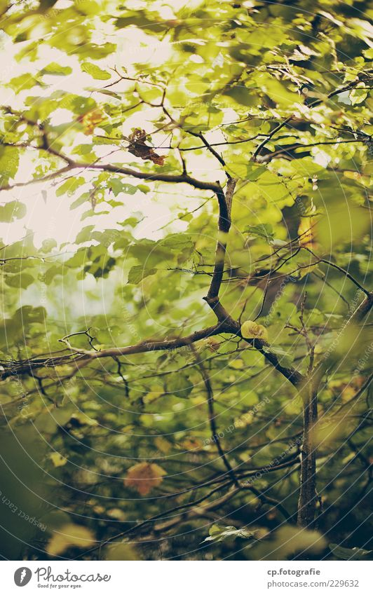 Nature Tree Plant Summer Leaf Autumn Natural Growth Branch Beautiful weather Copy Space Sustainability Branchage Twigs and branches