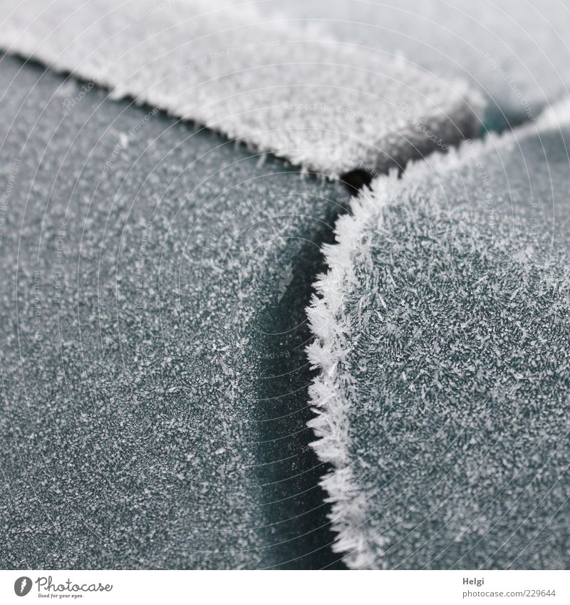 frosty morning in March... Climate Weather Ice Frost Metal Plastic Freeze Glittering Exceptional Sharp-edged Simple Cold Round Gray White Esthetic Bizarre