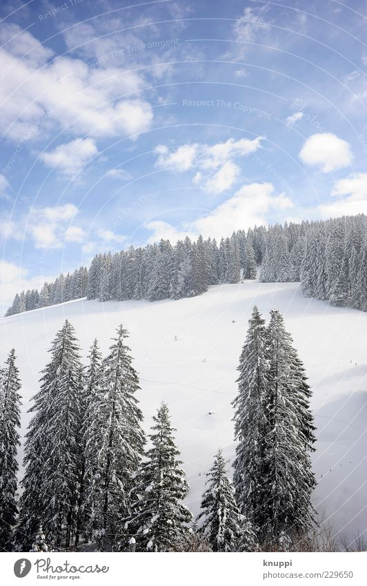 powder Environment Nature Landscape Plant Sky Clouds Sunlight Winter Beautiful weather Tree Forest Hill Mountain Rigi Blue Black White Calm Snowscape Snow layer