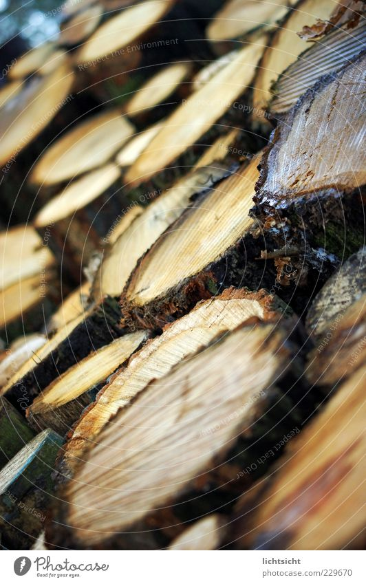 Nature Environment Wood Brown Background picture Perspective Circle Tree trunk Stack Furrow Copy Space Slice Heap Tree bark Spruce Firewood