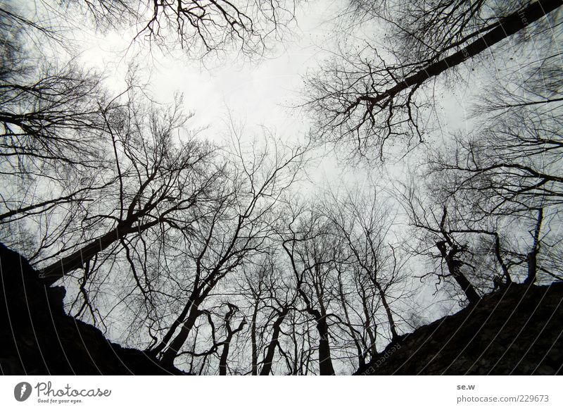 At the ladle Sky Bad weather Fog Tree Forest Harz Relaxation Illuminate Dark Sharp-edged Gray Black Calm Loneliness Sadness Far-off places Deserted Contrast