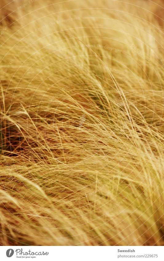 let go. Nature Autumn Wind Grass Bushes Foliage plant Longing Movement Colour photo Exterior shot Day Contrast Deep depth of field Blade of grass Copy Space top