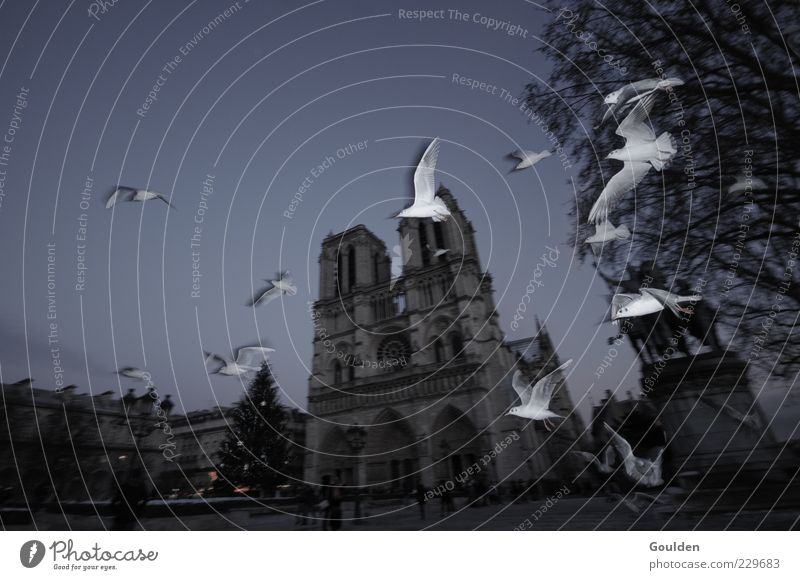 City Winter Animal Dark Architecture Bird Flying Church Group of animals Wing Manmade structures Paris Historic Landmark Seagull Downtown