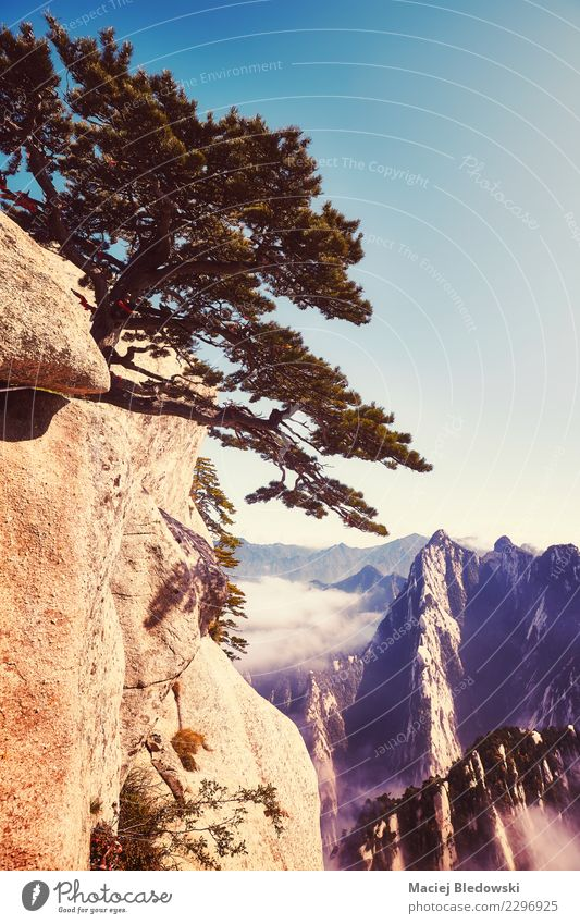 Huashan mountain landscape, China. Beautiful Vacation & Travel Tourism Trip Adventure Freedom Sightseeing Mountain Hiking Nature Landscape Sky Fog Tree Hill