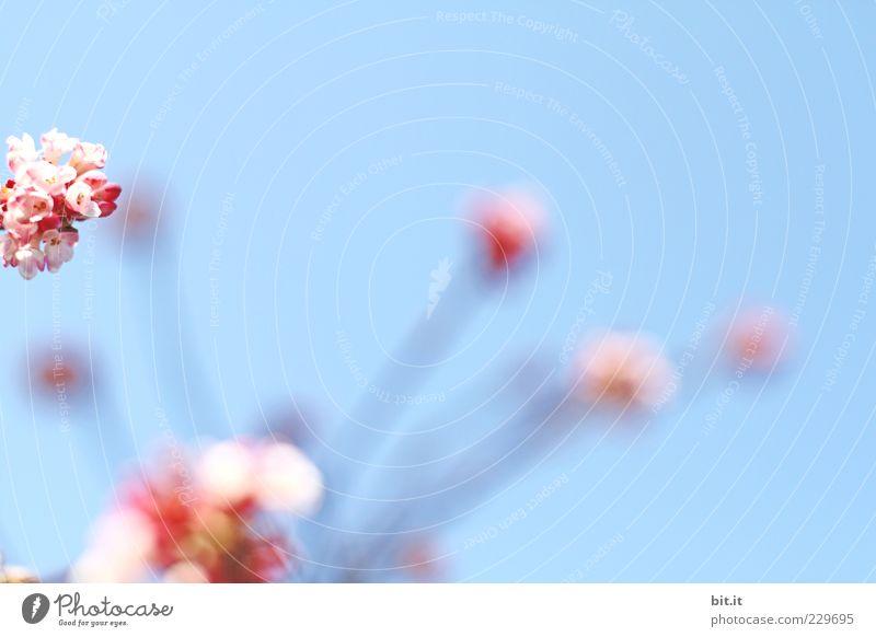 Sky Plant Blue Summer Flower Blossom Spring Feasts & Celebrations Pink Decoration Joie de vivre (Vitality) Kitsch Bouquet Stalk Event Fragrance
