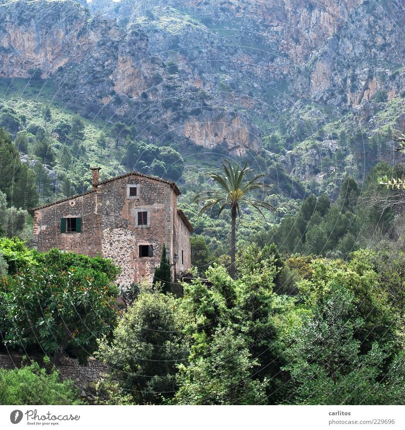 Nature Old Green Plant Tree Loneliness Landscape Leaf House (Residential Structure) Environment Mountain Wall (building) Wall (barrier) Rock Facade Bushes