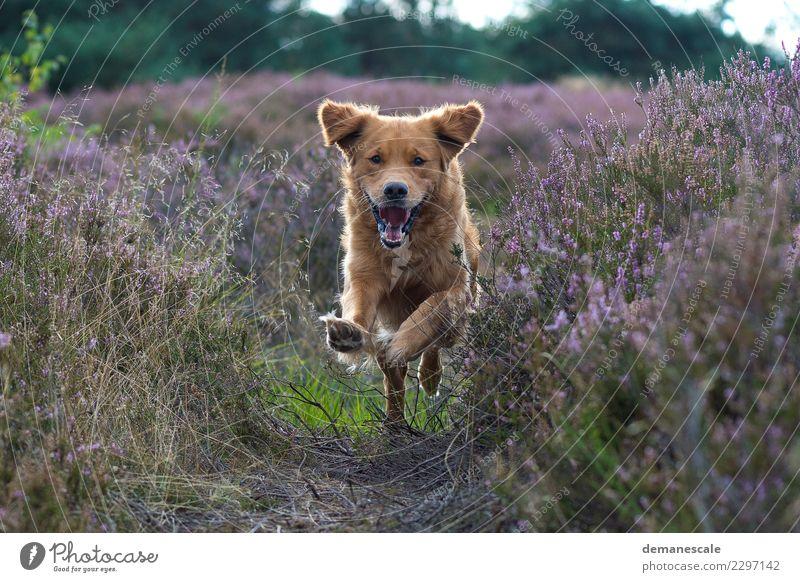 Nature Dog Plant Summer Green Landscape Flower Animal Joy Environment Blossom Grass Laughter Jump Park Happiness