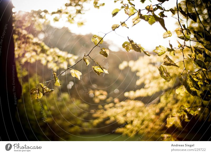 Sky Nature Tree Plant Leaf Autumn Environment Landscape Bright Climate Transience Dry Beautiful weather Tree trunk Twig Limp