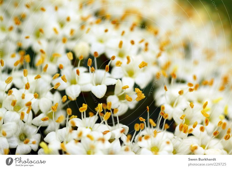 Nature White Plant Flower Summer Yellow Environment Blossom Blossoming Fragrance Odor Exotic Pistil Pollen Faded Macro (Extreme close-up)