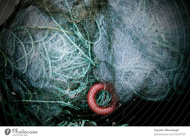Networking. Fishery Profession Fishing net Knot Chaos Muddled Norway Colour photo Abstract Structures and shapes Deserted Copy Space top Copy Space middle Loop
