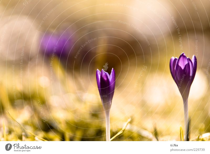 Nature Green Beautiful Plant Flower Yellow Environment Grass Happy Spring Bright Growth Violet Blossoming Beautiful weather Stalk