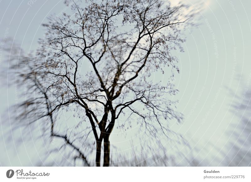 Sky Tree Plant Calm Environment Cold Growth Gloomy Transience Treetop Harmonious Twigs and branches Leafless