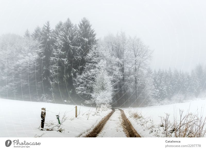 But still? Landscape Winter Bad weather Fog Snow Tree Bushes Fir tree Beech tree Field Forest Lanes & trails Fence Hiking Cold Brown Gray White Moody