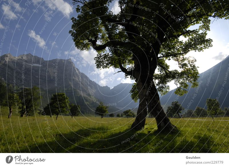Nature Tree Sun Summer Clouds Calm Relaxation Meadow Life Environment Landscape Mountain Air Healthy Alps Idyll