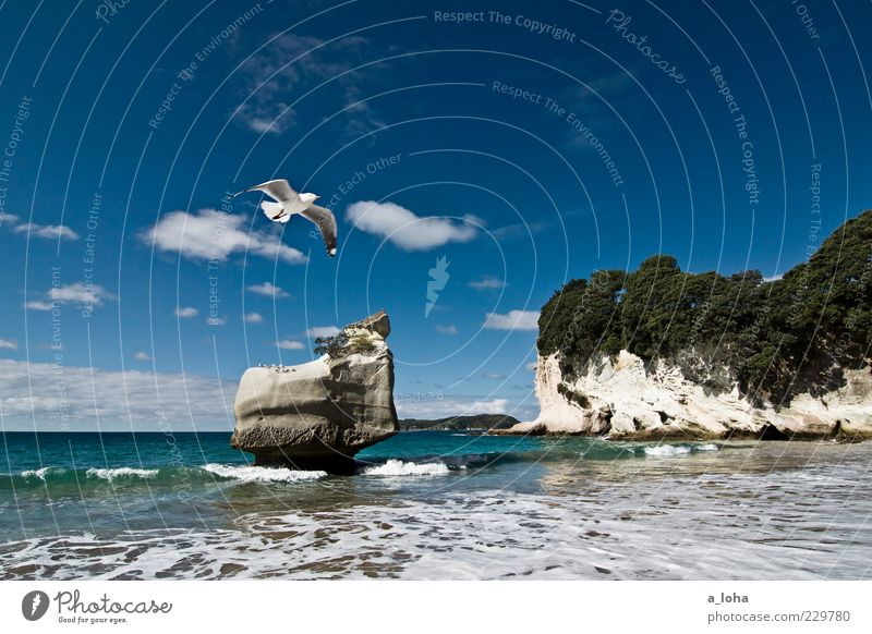 Sky Nature Water Tree Plant Ocean Beach Clouds Coast Waves Rock Wild animal Elements Bay Seagull Wanderlust