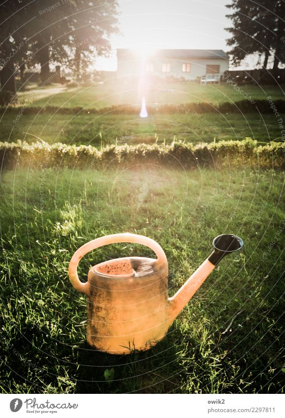 unique specimen Environment Plant Elements Air Cloudless sky Summer Tree Grass Bushes Grave Cemetery Watering can Plastic Glittering Illuminate Stand Wait Old