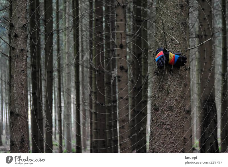 Nature Blue Tree Red Plant Winter Loneliness Forest Yellow Environment Clothing Gloomy Stripe Tree trunk Hang Doomed