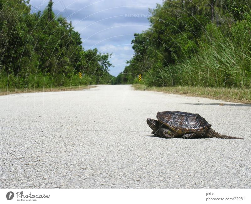 This may take some time Long Slowly Crawl turtle Street Lanes & trails